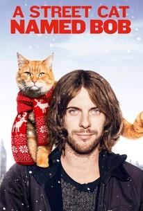 A Street Cat Named Bob 2016 Rotten Tomatoes