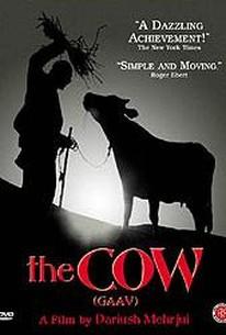 The Cow (Gaav)
