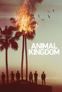 Animal Kingdom S1 (2016) Subtitle Indonesia