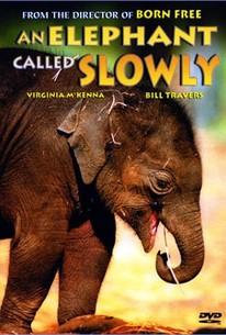 An Elephant Called Slowly