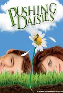 Pushing daisies season 1 blu-ray cover dvd covers & labels by.