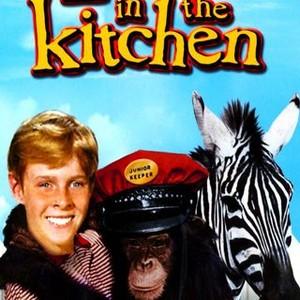 Zebra In The Kitchen 1965 Rotten Tomatoes