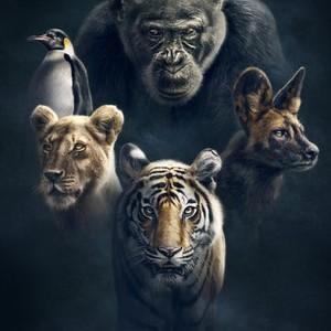 Planet Earth: Dynasties