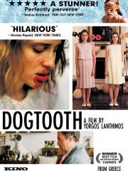 Dogtooth (Kynodontas)