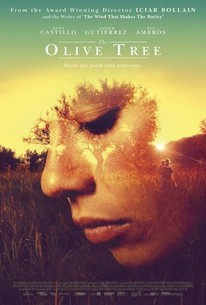 The Olive Tree (El olivo)