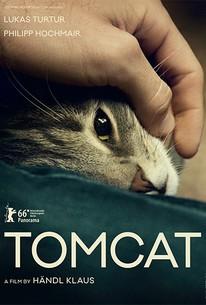 Tomcat (Kater)