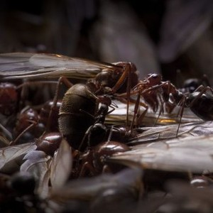 Empire of the Ants (1977) - Rotten Tomatoes
