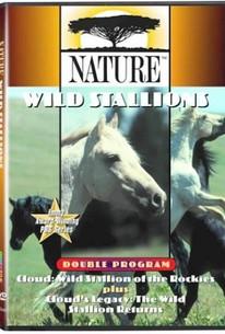 Cloud:Wild Stallions