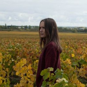 Back To Burgundy Ce Qui Nous Lie 2018 Rotten Tomatoes