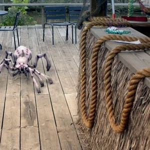 Arachnoquake Photos