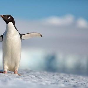 Disneynature: Penguins (2019) - Rotten Tomatoes