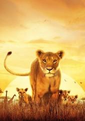 Serengueti: Season 1