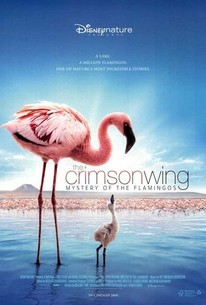 Disneynature Crimson Wing