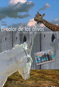 The Color of Olives (El Color de los Olivos)