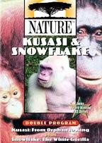 Nature - Kusasi and Snowflake