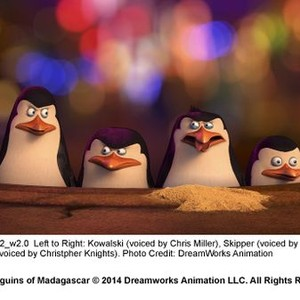 Penguins Of Madagascar (2014) - Rotten Tomatoes