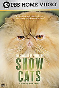 Standard Of Perfection - Show Cats