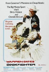 Cockfighter