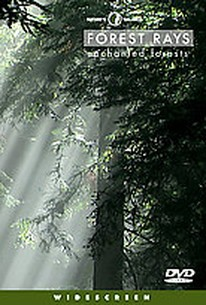 Nature's Balance - Forest Rays
