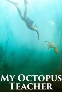 My Octopus Teacher (2020) - Rotten Tomatoes