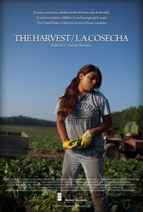 The Harvest (La Cosecha)