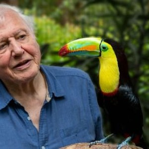 Life in Color With David Attenborough