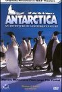 Antarctica - An Adventure of a Different Nature