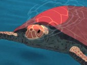 The Red Turtle La Tortue Rouge 2017 Rotten Tomatoes
