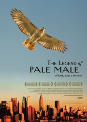 The Legend of Pale Male