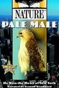 Pale Male