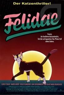 Felidae Stream