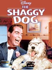The Shaggy Dog
