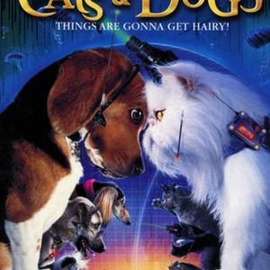 27+ Cats And Dogs Movie Download Background