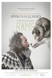Rams (Hrútar)