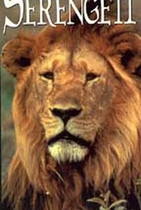 Tales of the Serengeti - The Lion's Tale