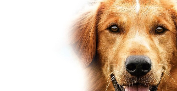 A Dog S Purpose 2017 Rotten Tomatoes
