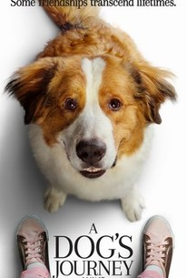 A Dogs Journey 2019 Rotten Tomatoes