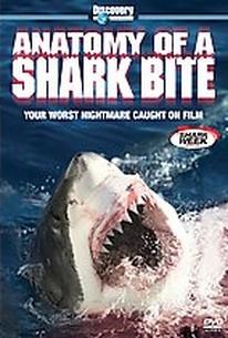 Anatomy of a Shark Bite