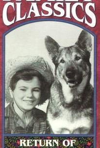 The Return of Rin Tin Tin (The Adventures of Rin Tin Tin)