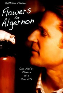 Flowers for Algernon (Charlie)