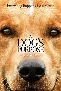 A Dog's Purpose (2017) - Rotten Tomatoes