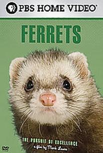 Ferrets - Pursuit Of Excellence