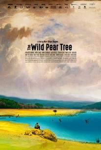 The Wild Pear Tree (Ahlat agaci)
